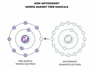antioxidant, free radical