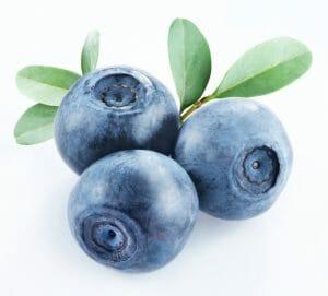 bilberry, biocidin lsf