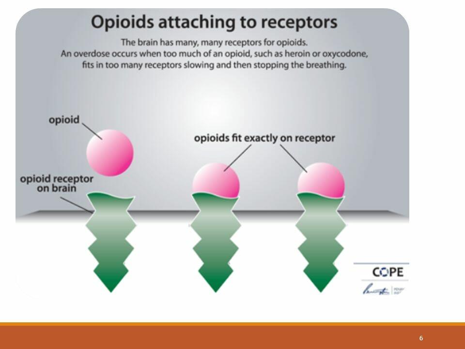 opioids, opioid receptors, heroin, oxycodone