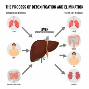 Dr. Shade's Liver Sauce, detoxification, detox, liver
