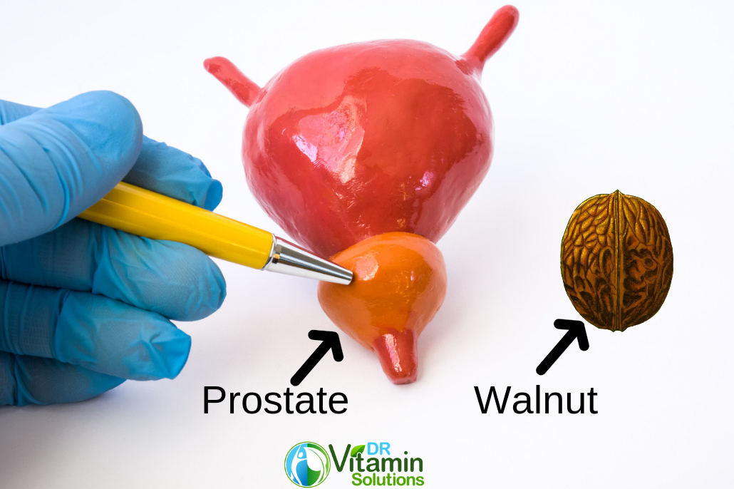 The Prostate is shaped like a Walnut.