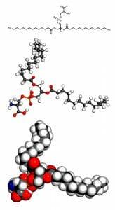 Phosphatidylserine, ps, model, phospholipid