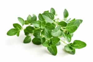 oregano, physician's strength oregacillin