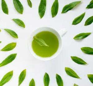 Green Tea, L-Theanine