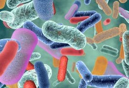 The Best Probiotic Supplements for Immune System Support