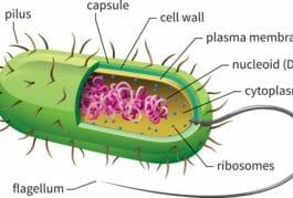 eye cell health