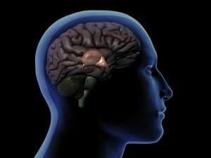 pineal gland, brain