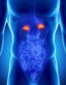 Male adrenal anatomy, adrenal glands, adrenaline