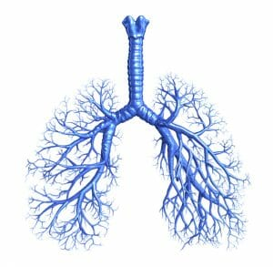 lungs, bronchi, respiratory