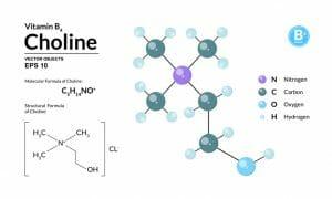 choline, vitamin b4