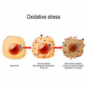 oxidative stress, free radicals, cell damage