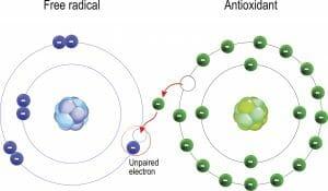 antioxidant, free radical, electron donor