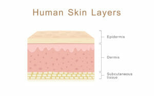transdermal absorption, layers, dermal, skin