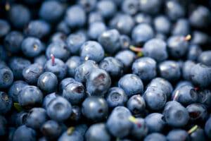 bilberry, antioxidants