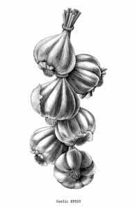 ilustration of strand of garlic cloves