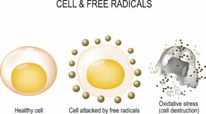 diagram depicting how free radicals damage cells