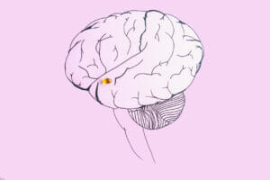 These are the Best Brain Supplements Available Today | DR Vitamins
